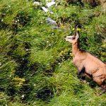 27-piatra-craiului-brana-caprelor
