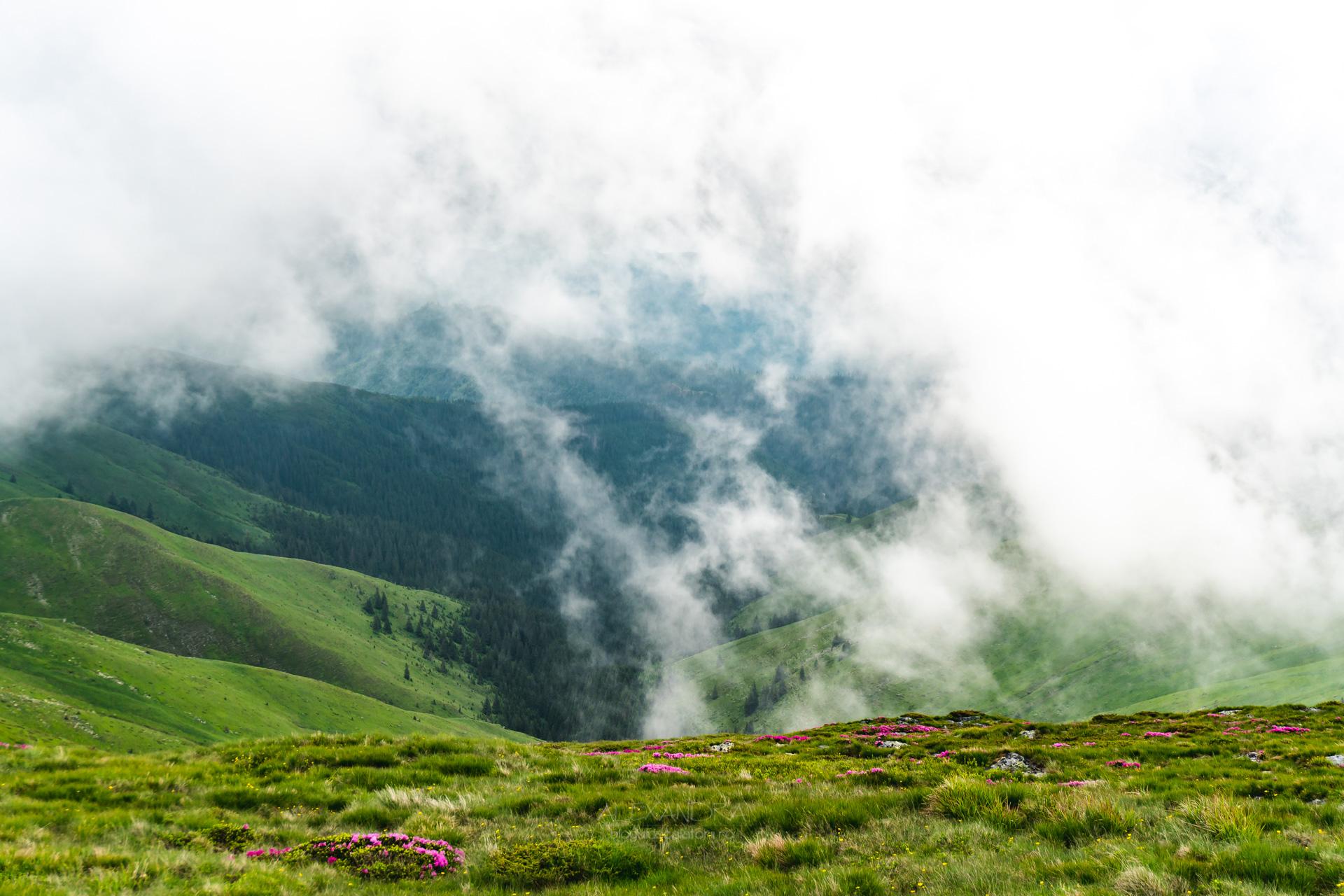 Munții Leaota